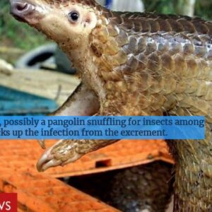 Coronavirus: The race to find the source in wildlife - BBC News
